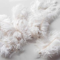 Carnival feather headdress plumes. set of five.