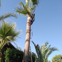 Garden and palm trees cleaning