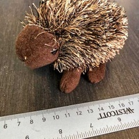 Lovely small hedgehog