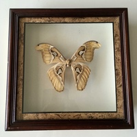 Framed big butterfly from bali