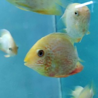 Red severum. the parents are in the pictures at the end