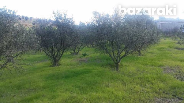Agricultural land in psevdas village olive trees and plenty of water-1